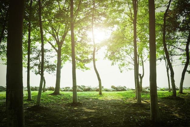 夕暮れの木 無料写真