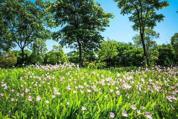 公園の花 無料写真