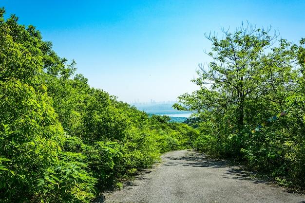 美しい山道 無料写真