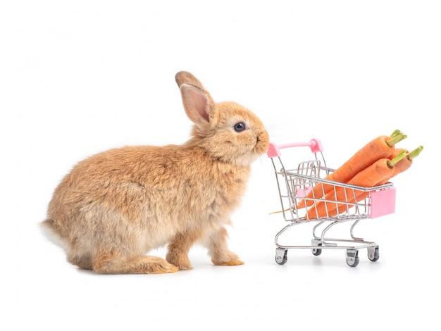 赤茶色のかわいい赤ちゃんウサギとニンジンの買い物カゴ Premium写真