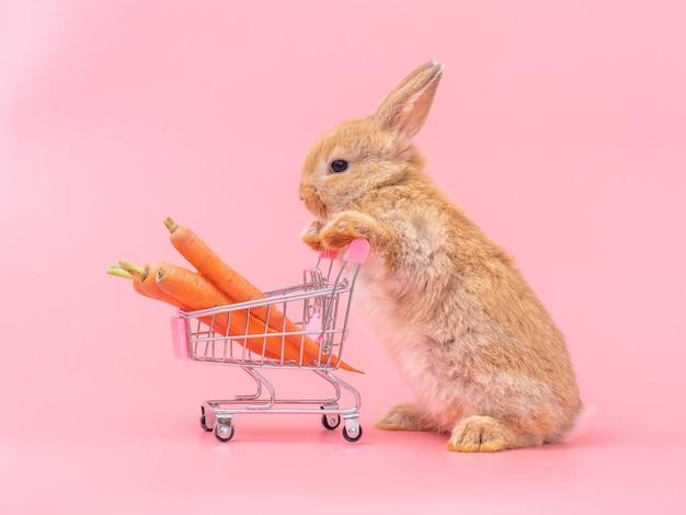 茶色のかわいい赤ちゃんウサギ立って、赤ちゃんニンジンと一緒に買い物カゴを保持します。 Premium写真