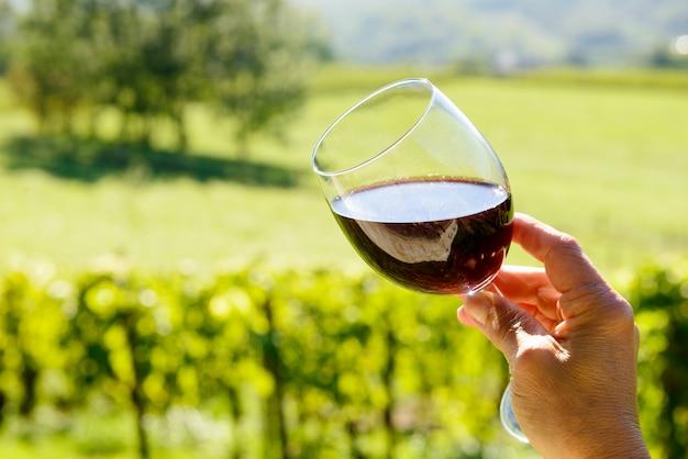 Бокал красного вина с виноградником Premium Фотографии
