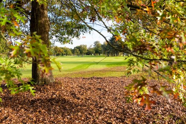 秋のゴルフコースのツリー Premium写真