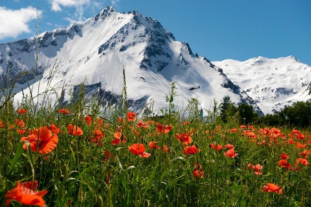 山とポピーのフィールド Premium写真