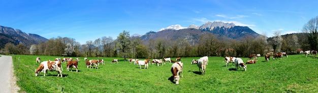 牧草地の牛 Premium写真