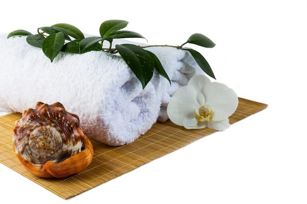 Концепция спа с раковины, изолированные на белом Premium Фотографии