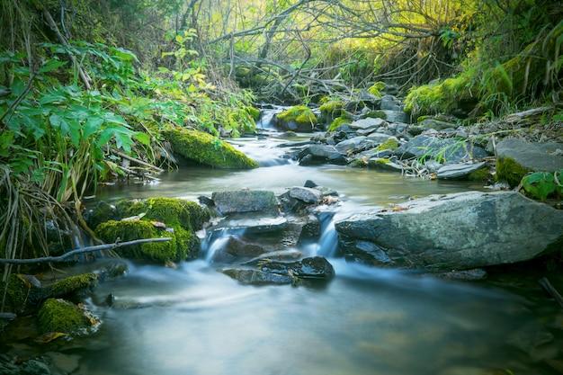 フォレストクリークの滝の美しい風景 Premium写真