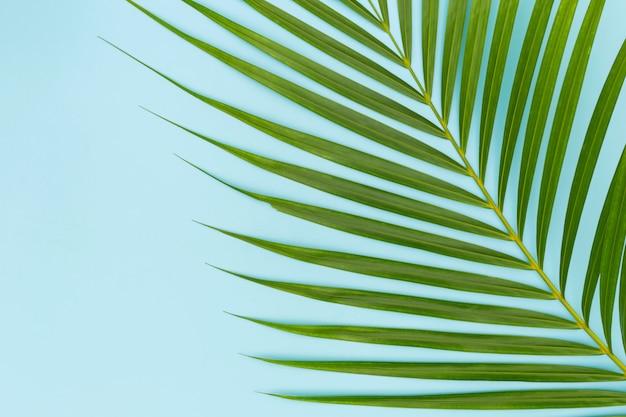 青のヤシの木の緑の葉 Premium写真