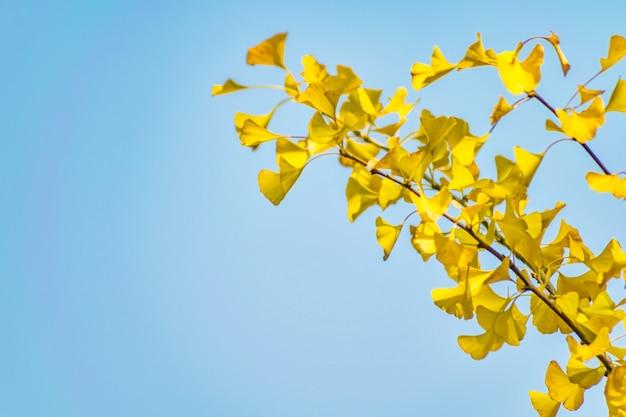 自然の色の公園の銀杏の森 無料写真