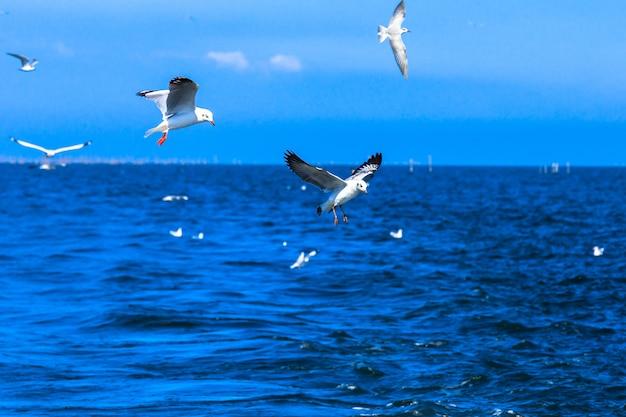 青い空と熱帯の海で飛んでいるカモメ Premium写真
