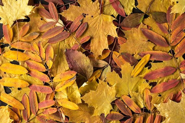 秋の落ち葉で作られたカラフルで明るい背景。 Premium写真