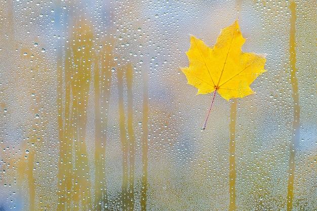 水滴とガラスの秋のカエデの葉 Premium写真