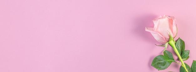 パステルピンクの背景にピンクのバラ。 Premium写真