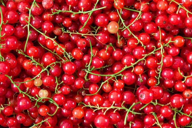 熟したジューシーな赤スグリの果実の背景 Premium写真