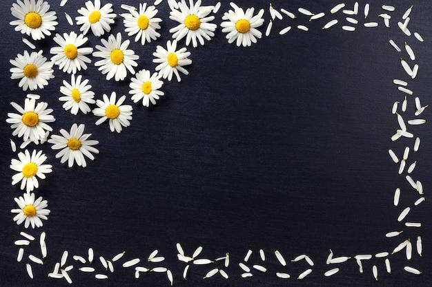 黒い背景に白いヒナギクの長方形のフレーム。コピースペースと花柄は平らに置きます。花のトップビュー。 Premium写真