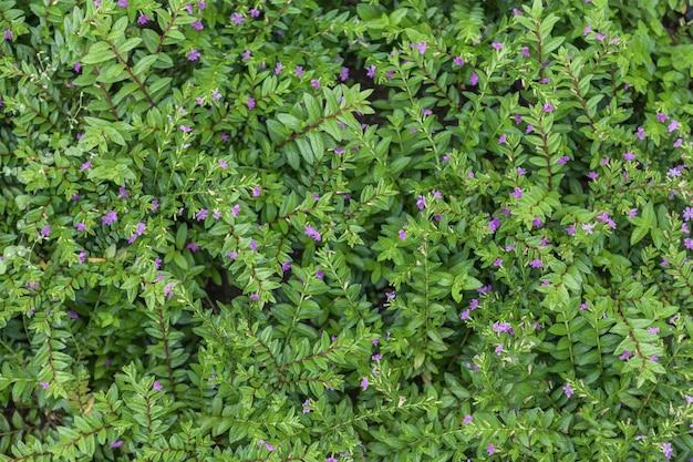 自然の開花植物のカーペット、小さな葉を持つ草。 Premium写真