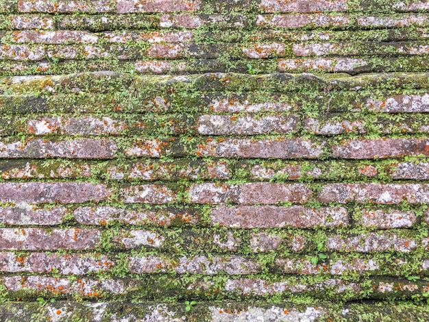緑の苔とツタで覆われた古い古代の放棄されたレンガの壁の背景。 Premium写真