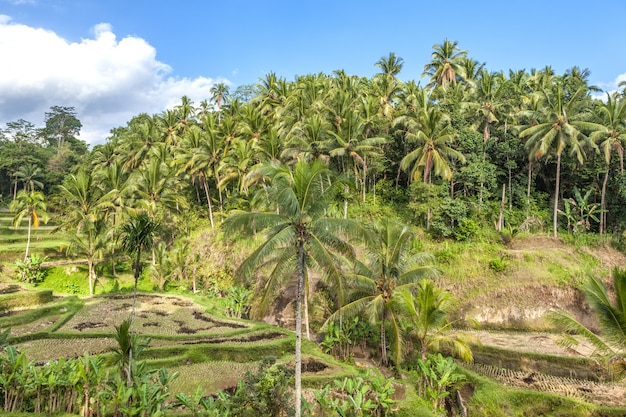 アジアのバリ島の熱帯林 Premium写真