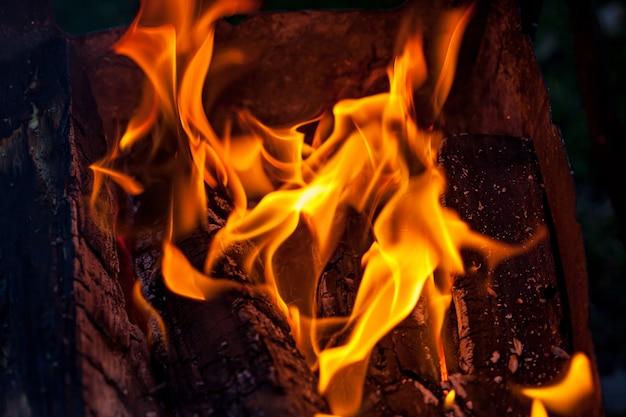 火の炎、燃える丸太 Premium写真