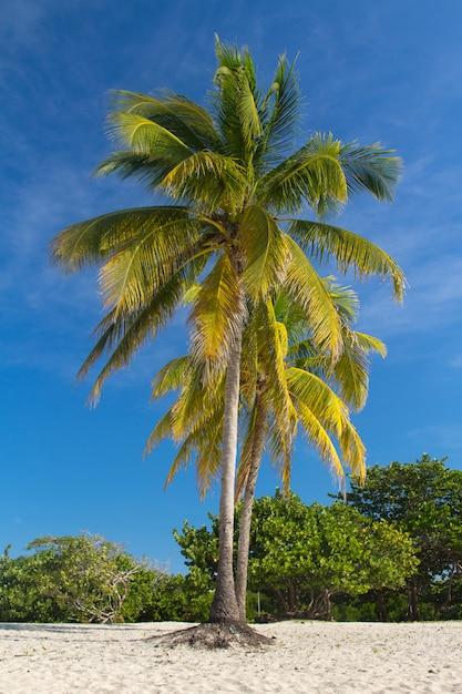 ビーチの風景にヤシの木 Premium写真