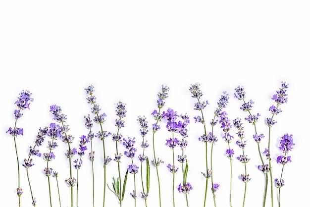 白い背景の上の新鮮なラベンダーの花 Premium写真