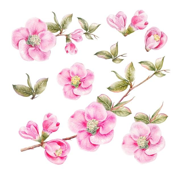 素晴らしい春の花のコレクション。 Premium写真