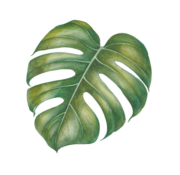 水彩の熱帯植物を葉します。 Premium写真