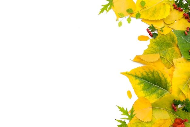 Фон из осенних желтых листьев .. Premium Фотографии