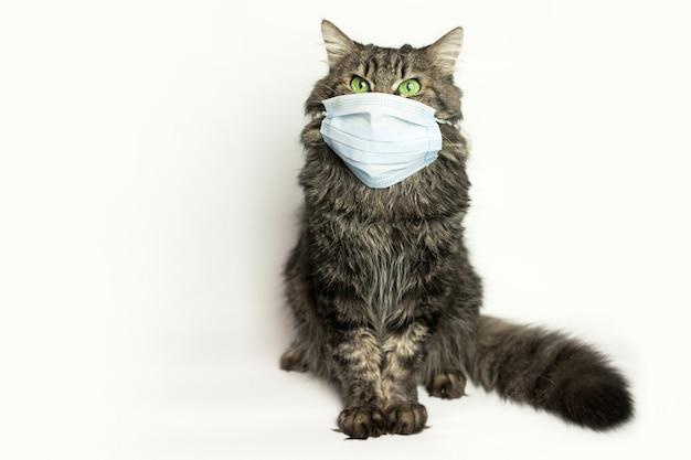 猫ウイルス保護用医療マスク Premium写真