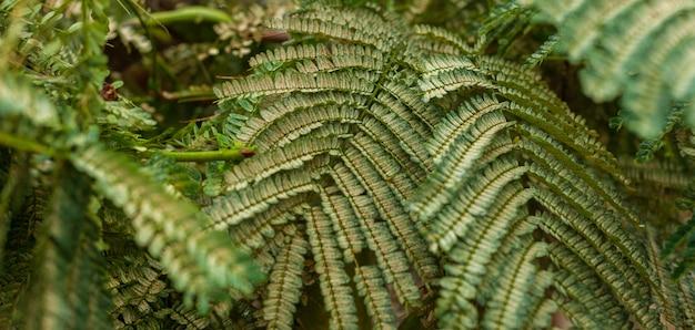 木の葉からの背景。 Premium写真