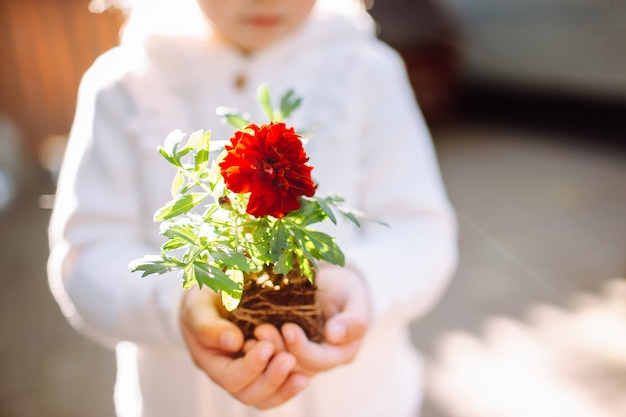 ポットが彼女の裏庭に滞在せずにマリーゴールドの花を保持している小さな女の子 Premium写真