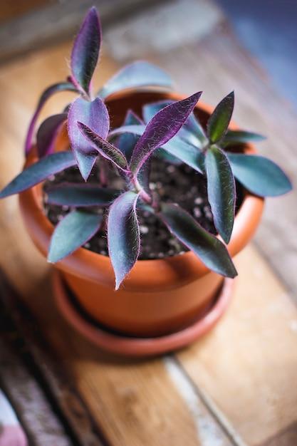 家の植物のインテリア 無料写真