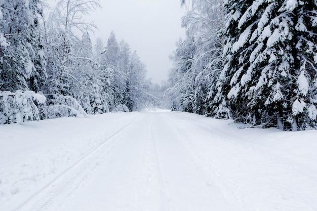 冬の森、美しい冷ややかな風景、ロシアの雪道 Premium写真