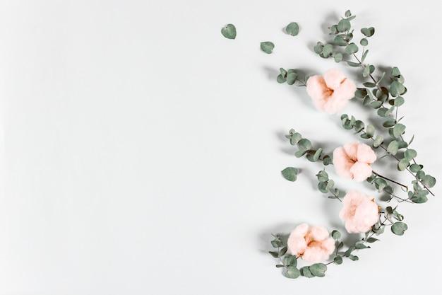 Композиция цветов - свежие листья эвкалипта и хлопковые цветы на светлом фоне. Premium Фотографии