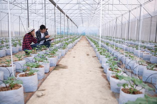 タブレットを持つ農業研究者はゆっくりと植物を調べます。 無料写真