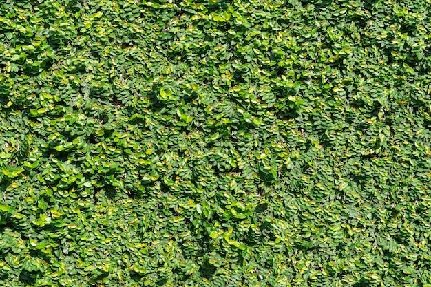 緑の植物の木の壁の背景テクスチャ 無料写真