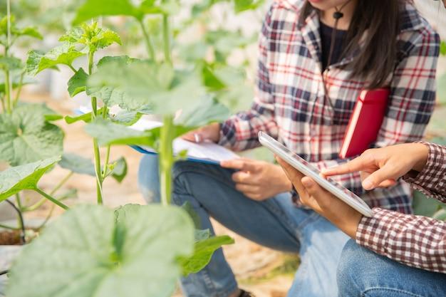 農学者は農場で成長しているメロンの実生、農家および研究者を植物の分析で調べます。 無料写真