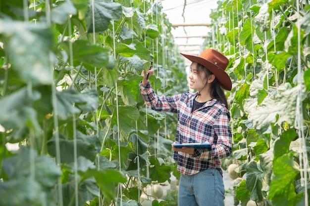 農夫は木にメロンを制御します。持続可能な生活の概念、野外活動、自然との接触、健康食品。 無料写真