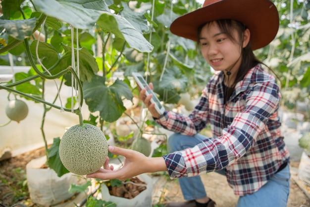 温室で有機水耕菜園を作業するためのタブレットと農家。スマート農業、農場、センサー技術の概念。温度を監視するためのタブレットを使用して農家の手。 無料写真