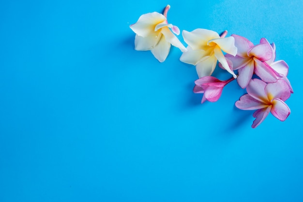 Группа розовый франгипани на синем фоне Бесплатные Фотографии