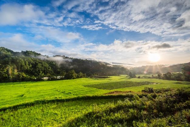 タイの朝の大きな田んぼ 無料写真