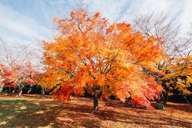 Красный и оранжевый лист осеннего дерева в японии Бесплатные Фотографии