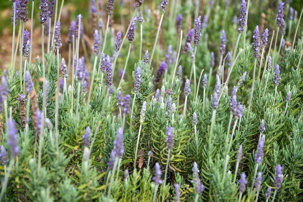 Крошечный фиолетовый цветок в саду Бесплатные Фотографии