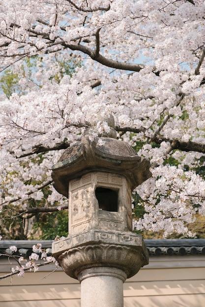 アンティークランタンと桜の花 無料写真