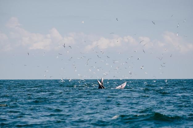 海のクジラ 無料写真