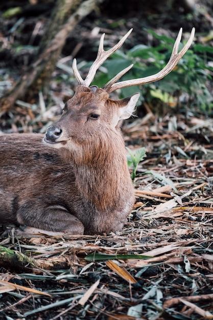 動物園の鹿の肖像画 無料写真