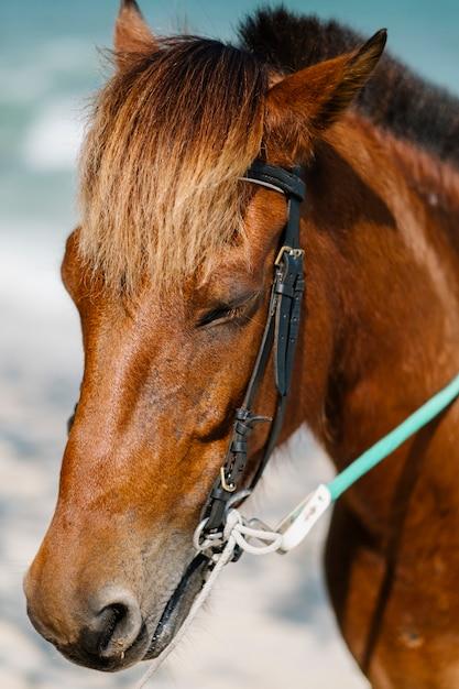 馬の顔の肖像 無料写真