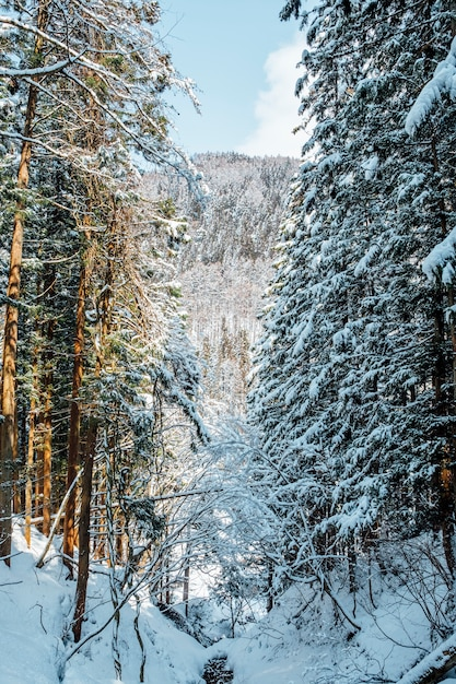 日本の雪の森 無料写真