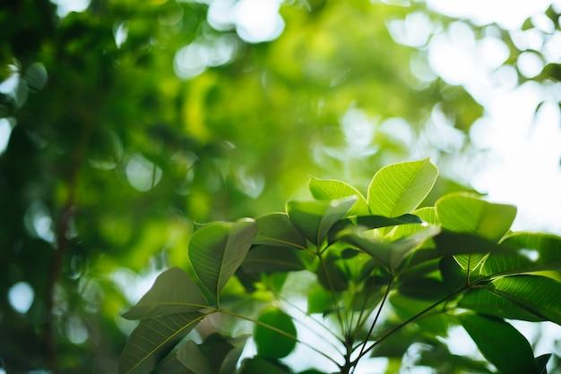 緑の葉の背景 無料写真