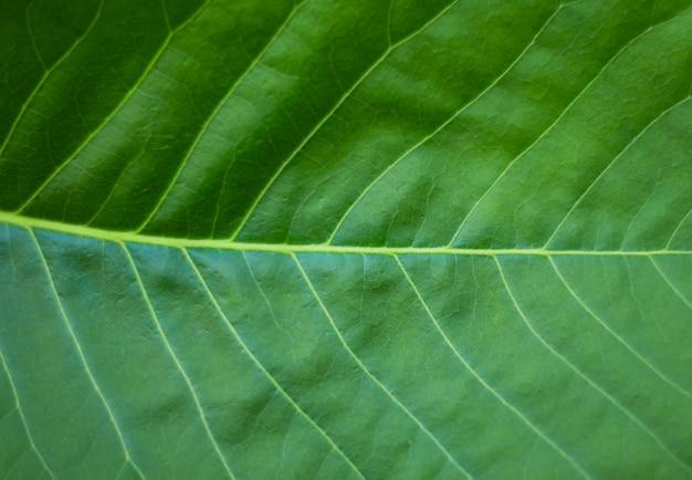 緑の葉のテクスチャ背景 無料写真